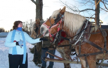 Horse drawn sleigh ride in southern Vermont