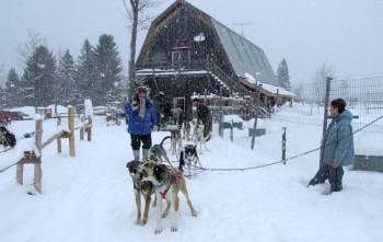a dog sledding adventure in the green mountains
